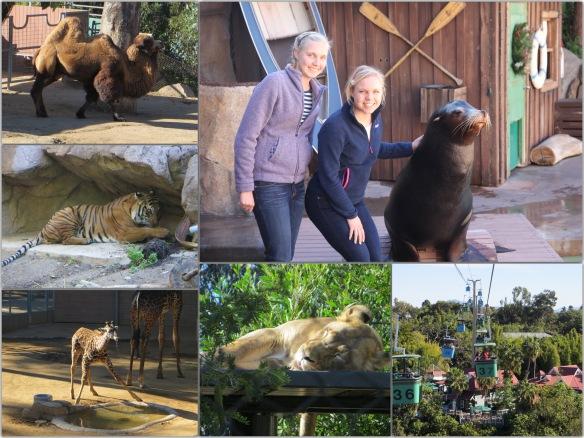 sd zoo xmas 2014 - 2