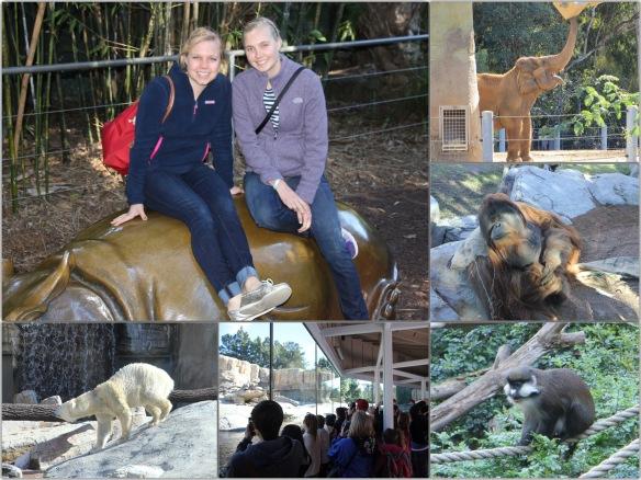 sd zoo xmas 2014